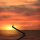 CORMORANT IN THE SUNSET by TOM YORK