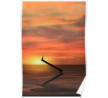 CORMORANT IN THE SUNSET Poster