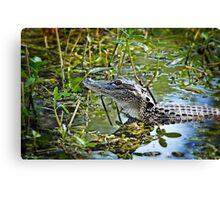 Little Gator  Canvas Print