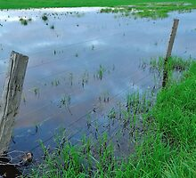 flooded fencing by metriognome