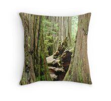 Redwood Trees Art Prints Big California Redwoods Throw Pillow