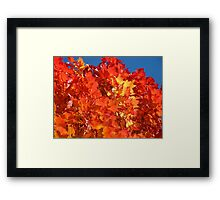 RED Nature Art Prints Orange Yellow Autumn Leaves Trees Framed Print
