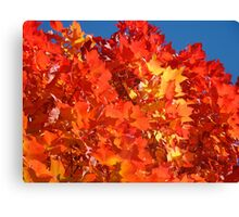 RED Nature Art Prints Orange Yellow Autumn Leaves Trees Canvas Print