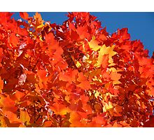 RED Nature Art Prints Orange Yellow Autumn Leaves Trees Photographic Print