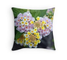 Closeup of Lantana Camara Spanish Flag  Throw Pillow
