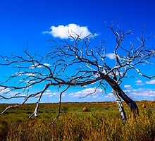Skeleton Country by Matt Mason