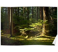 Constitutional Light - Orcas Island Poster