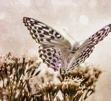 PAPILLONS - 2 by MadiS
