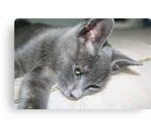 Close Up Of A Grey Kitten Canvas Print