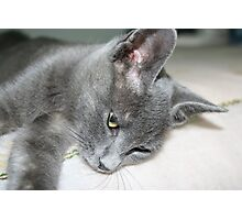 Close Up Of A Grey Kitten Photographic Print