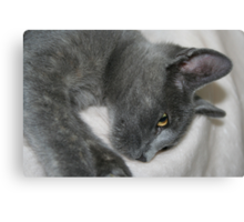 Close Up Portrait Of A Relaxed Grey Cat Canvas Print