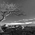 Lonesome Tree by shadesofcolor