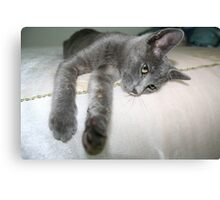 Russian Grey Cross Tabby Cat Canvas Print