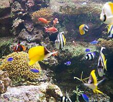 Aquarium life by TheSmileEffect