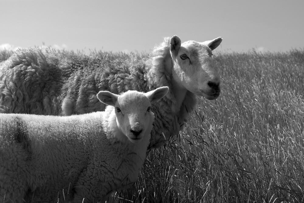 Lamb and Ewe by Lou Wilson