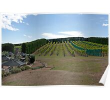 Hillside Vineyard Poster