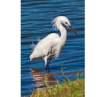 Snowy Egret at the Pond  Photographic Print