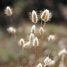 Fluffy Grass #1 by KUJO-Photo