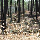 Fluffy Grass #4 by KUJO-Photo