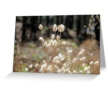 Fluffy Grass #5 Greeting Card
