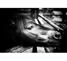 Little Pony Photographic Print
