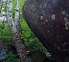 Giant Boulder Birch and Mushrooms by Nazareth