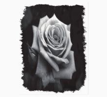 Pink Roses in Anzures 4 B&W by Christopher Johnson