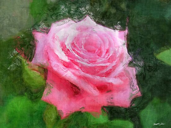 Pink Roses in Anzures 4 Sketchy by Christopher Johnson