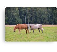 Playful Horses Canvas Print