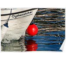 Oystercatcher Poster