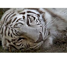 Sleeping Tiger  Photographic Print