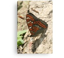 Poplar Admiral Butterfly on mountain stones, Rila Mountains Bulgaria Canvas Print