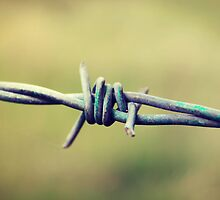 Barbed Wire by Sophie Lasson