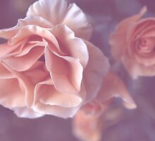 Pale Pink Roses by Loisb