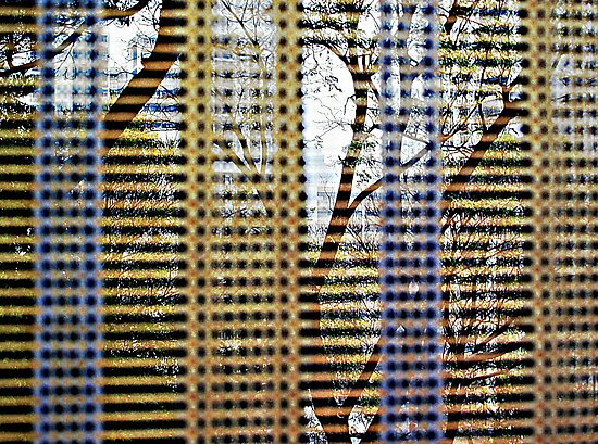 Through the Blinds © by Ethna Gillespie