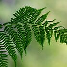 Fern leaf by starwarsguy