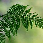 Fern leaf by starwarsguy