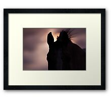Equine Sunset Framed Print