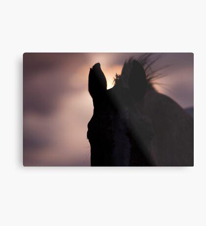Equine Sunset Metal Print