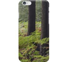 forest with ferns  iPhone Case/Skin