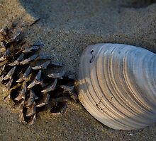 Seashell comb by Clint Fern
