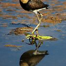 Comb - Crested Jacana by Sue  Fellows