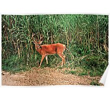 Our Neighbor Buck Poster