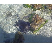 Stingray in the Shallows! Point Turton. S.A. Photographic Print