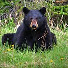 Bear Stare by JamesA1