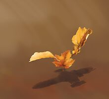 Leaf on the Wind by Glenn Martin