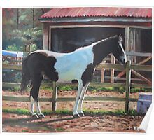 Brown and White Horse by Stable Poster