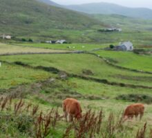 A Cow in Kerry Sticker