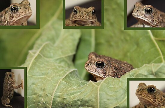 Garden Toad Collage by aprilann
