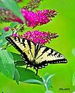 Butterfly in Bradford II by Caleb Ward
